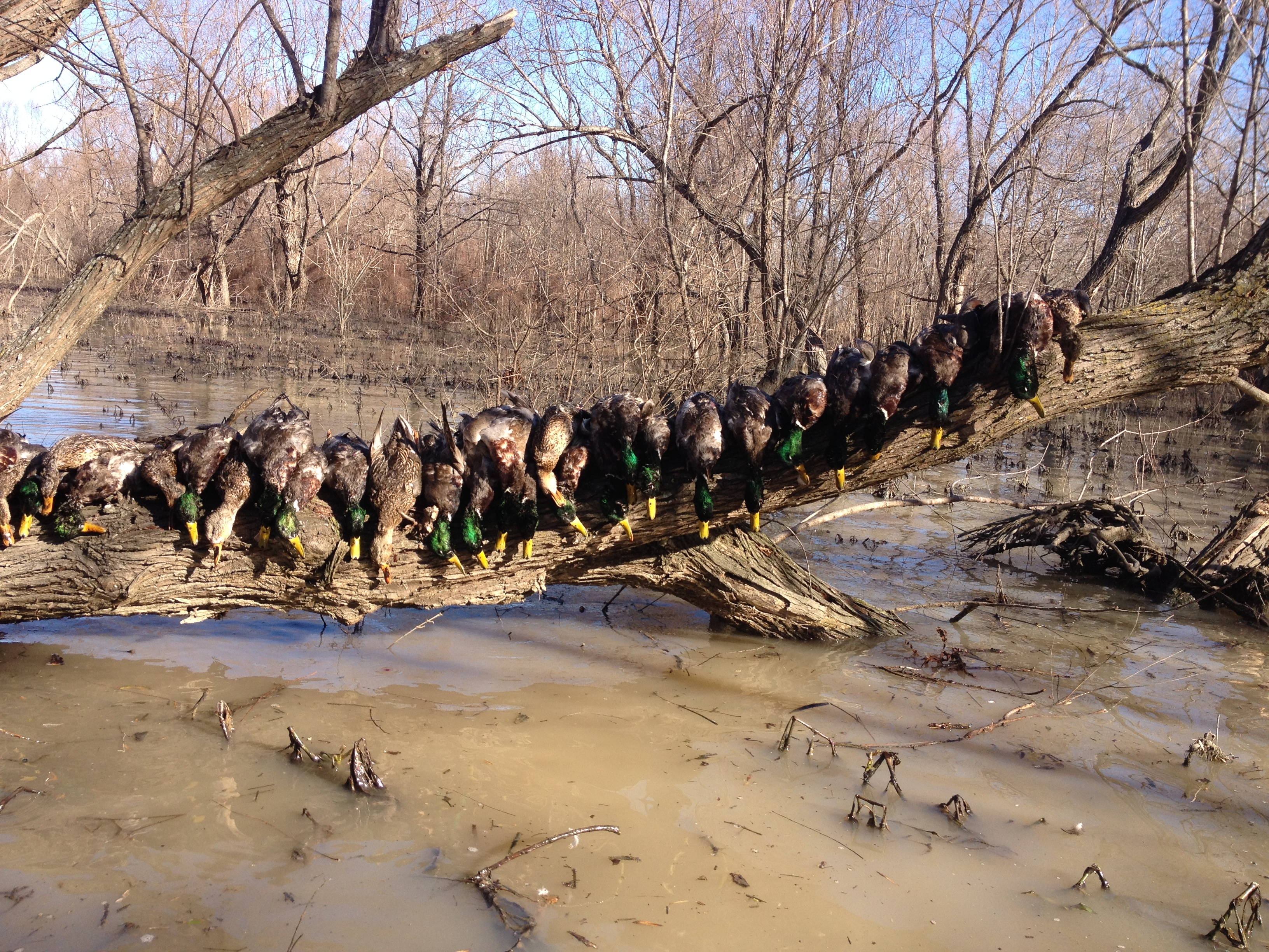 Arkansas Duck Hunting – Duck Hunt Arkansas – See our Video ...